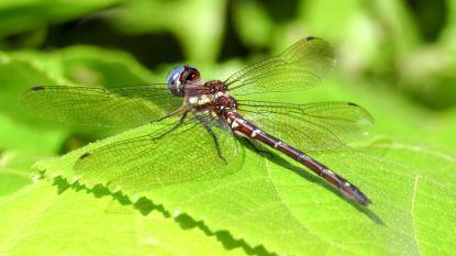 """""""Hyperalarmerende"""" studie waarschuwt voor massaal verdwijnen insecten"""