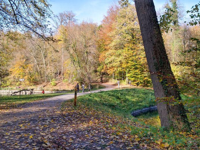 Drukte in het Zoniënwoud: wandelaars genieten van de mooie herfstkleuren.