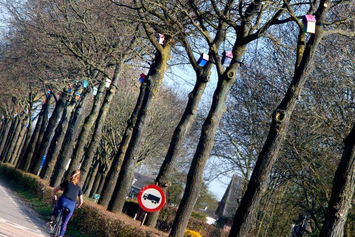 Langs de provinciale weg tussen Rhenoy en Acquoy zijn vogelhuisjes opgehangen ,als bestrijding tegen de eikenprocessierups.