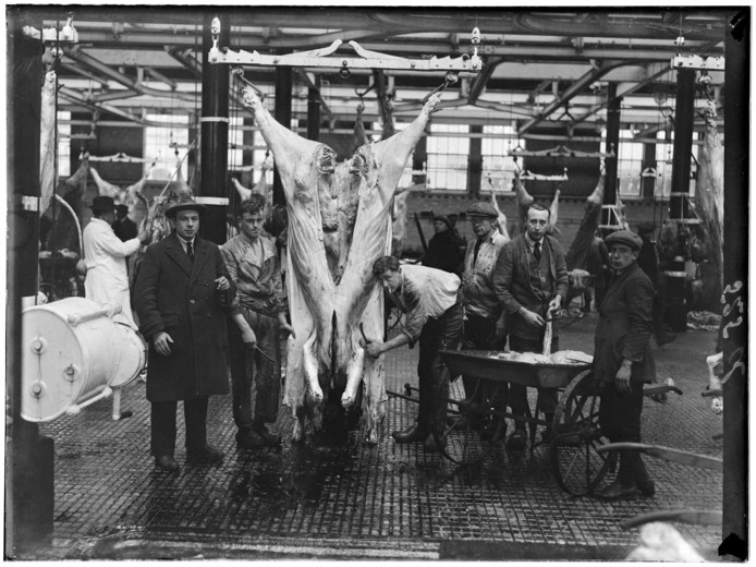 Een geslacht rund wordt ontleed in het abattoir op de Veelaan in Amsterdam-Oost. De foto werd gemaakt in 1936.