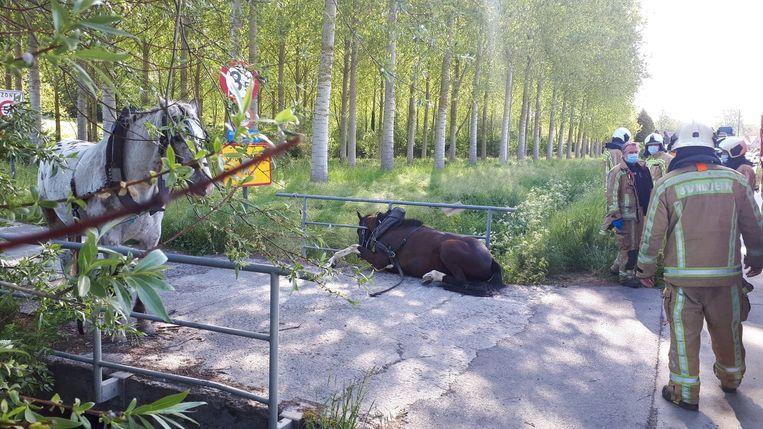 Het paard gleed van de brug en kwam klem te zitten.