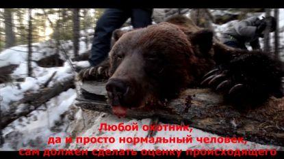 Russische gouverneur schiet beer in winterslaap dood, strafrechtelijk onderzoek geopend