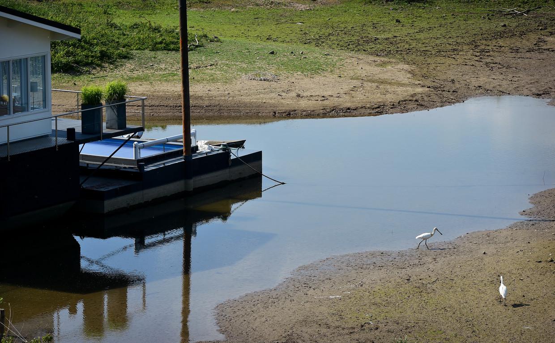 Vanwege de droogte staat het water in de Waal laag. Woonboten dreigen droog te komen liggen.  Beeld Marcel van den Bergh / de Volkskrant