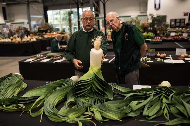 De jury inspecteert een uit de kluiten gewassen prei tijdens de herfsteditie van de Harrogate Flower Show. De expositie in Noordoost-Engeland, die tot en met zondag duurt, is met 100.000 bezoekers een van de grootste en meest prestigieuze Britse tuinshows.  Beeld AFP