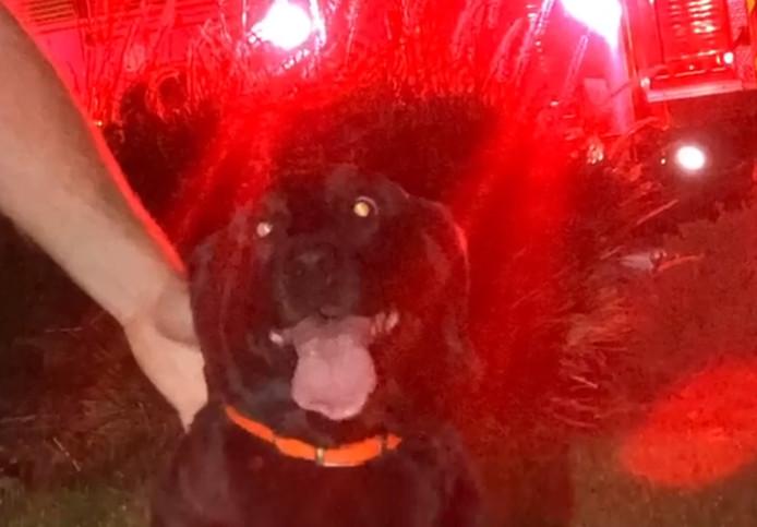 Aux yeux des secours, la chienne Maggie a été héroïque