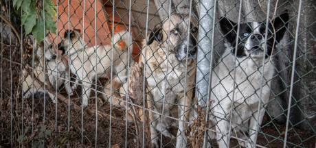 Denkt iemand nog aan de honden van Rudi Lubbers? 'Ze worden gewoon vergeten'