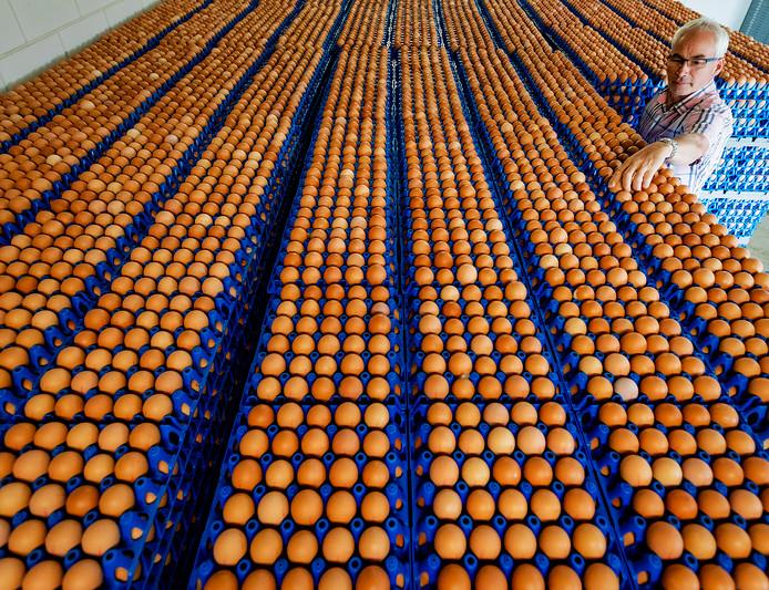 Pluimveehouder Helmus Torsius bij de voorraad eieren op zijn bedrijf. B