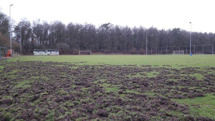 Sportpark De Pinkenberg in Velp is bezocht door een groep wilde zwijnen.