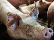 Dispuut in Oirschot onbeslist: aantal dieren ter discussie