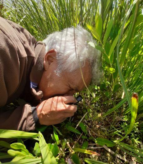 De zeer zeldzame veenmosorchis, de droom van iedere plantengek, ziet er eigenlijk niet uit