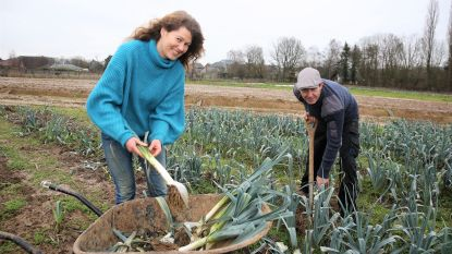 Een jaar nadat graafmachines velden omploegden: Zelfoogstboerderij 't Groentehart neemt nieuwe start
