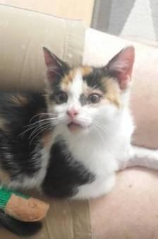 Dierenbescherming: Mishandelde kitten Kitty is een vechtertje