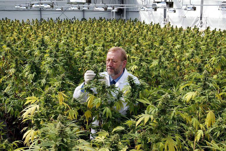 Wietkweker James Burton levert al plastic potjes met vijf gram marihuana aan apotheken. Sinds 2003 is er bij de Nederlandse apotheken medicinale wiet verkrijgbaar. Op dinsdag zal een Kamermeerderheid instemmen met een wetsvoorstel dat de weg vrijmaakt voor een experiment met wietteelt onder staatstoezicht. Beeld ANP