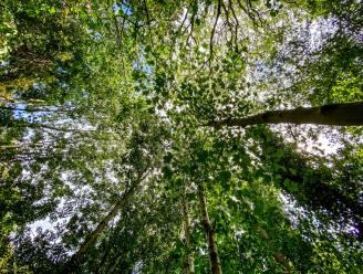 Infoavond met netwerkmoment 'Boom zoekt bos en bos zoekt grond' in Lennik