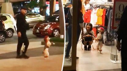 Trieste beelden: hondje wordt door baasjes gedwongen om hele tijd rechtop te lopen