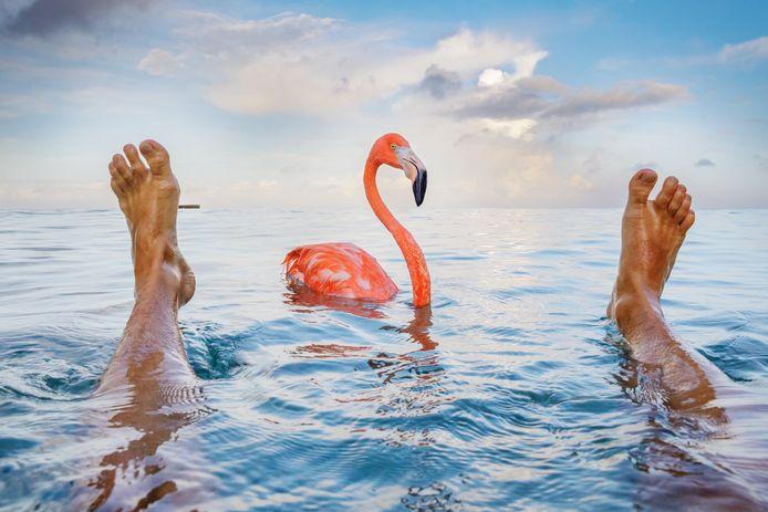 Flamingo Bob is tegenwoordig wereldberoemd.
