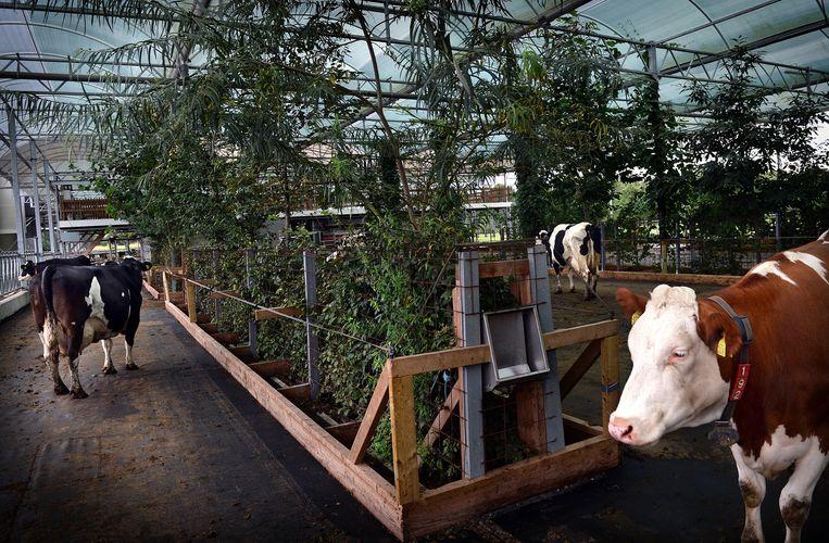 De koeientuin in Groenlo. Beeld Marcel van den Bergh / de Volkskrant