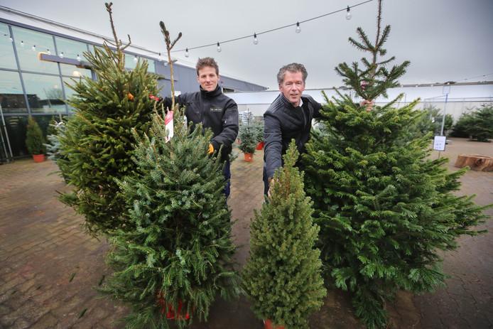 In tuincentra worden meestal verschillende soorten kerstbomen verkocht. Van links naar rechts: de bedreigde fijnspar (Picea abies), de zilverspar (Picea omorika), dwergspar (Picea glauca Conica) en de nordman (Abius Nordmaniann).