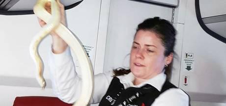 Slang ontsnapt tijdens vlucht: 'We weten niet waar het dier is'