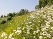 Meer ruimte voor de natuur: waterschap gaat dijken anders maaien