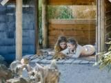 Wat te doen tijdens de onderwijsstaking? Werken in de Beekse Bergen en de kinderen op safari