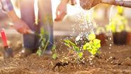 Van spinazie tot radijsjes: dit kan je nu al zaaien in je tuin