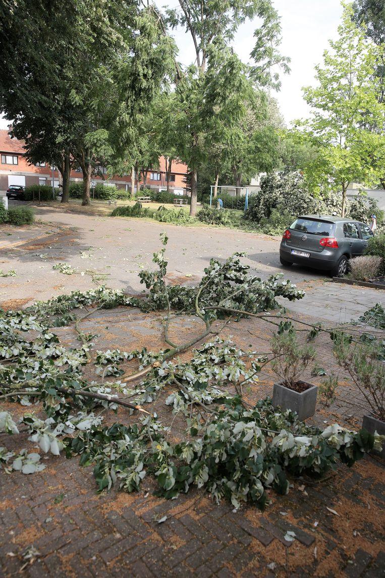 In de wijk Windmoleken sneuvelden bomen en vlogen ook de takken in het rond.