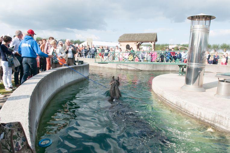 Archiefbeeld - Op Erfgoeddag kunnen bezoekers onder andere het paardenzwembad bezichtigen.