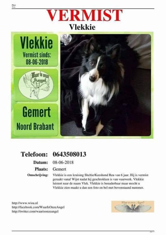 Yvonne van den Elzen doet een oproep om haar vermiste hondje te vinden.