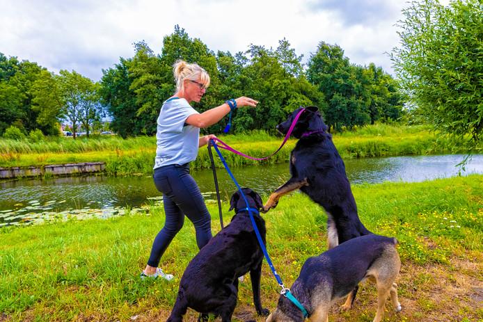 Margot Swart speelt met haar honden Moos, Morris en Yindee bij het Weteringpad.