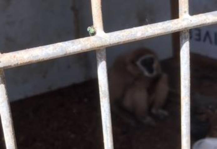In juli trof de politie bij een controle van het terrein aan de Terraweg twee apen aan, die waren opgesloten in een hok. Het ging om een ringstaartmaki en een gibbon. Beide soorten mogen niet door particulieren worden gehouden.