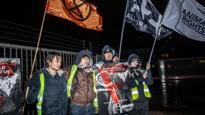 Dierenrechtenorganisaties houden serene wake aan kalfsslachterij Planquette