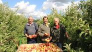 Fruitkweker Picard laat bezoekers zelf hun appels plukken