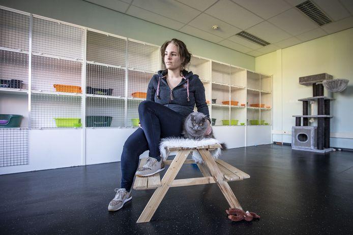 Normaal zit het kattenhotel van Margreet Oude Avenhuis (35) uit Weerselo helemaal vol. Nu heeft ze maar één logé: Misty, een Britse Langhaar.