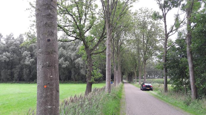 Door de ziekte aangetaste essen langs de Boterdijk tussen Aalten en Lichtenvoorde. De oranje stip geeft aan dat de boom gekapt wordt.