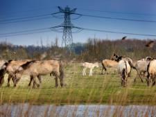 'Ruim 1.100 dieren weg uit Oostvaardersplassen'