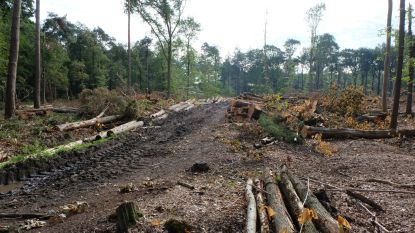 Bomen kappen om natuur te redden