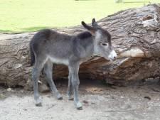 Sissi is door publiek verkozen tot het lievelingsdier van Tiergarten Kleef