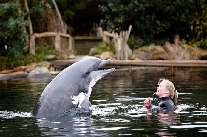 Dolfijn in het Dolfinarium.