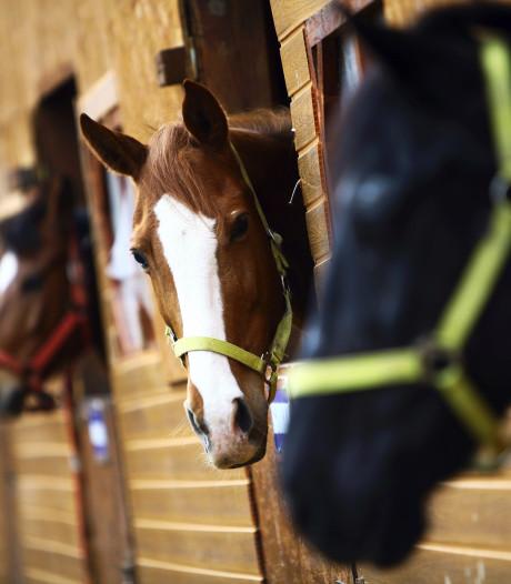 'Paardenhandelaars, ook in Zuidoost-Brabant, frauderen voor miljoenen'