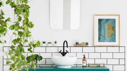 Een groene douche: de beste planten voor in je badkamer