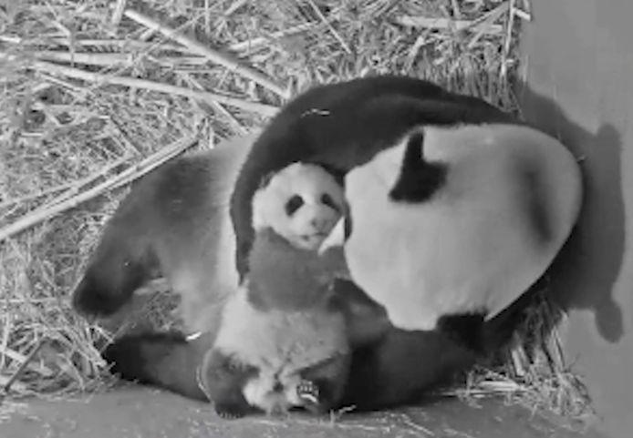 Moeder Wu Wen en haar jong.