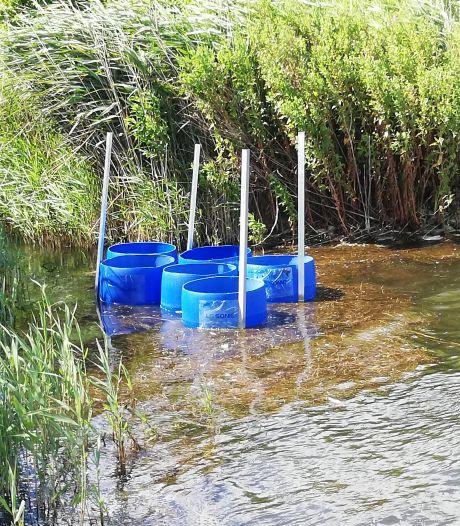 Nieuwe technologie moet fosfaat in Zoetermeerseplas te lijf
