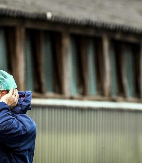 Landelijke ophokplicht pluimvee om vogelgriep