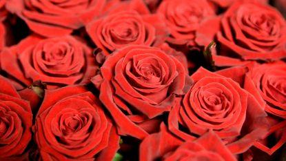 Hamse sp.a afdeling zet rusthuizen in de bloemen