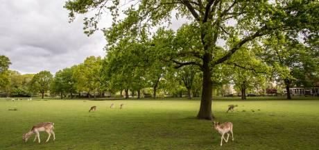 Buurtvereniging wil meedenken over toekomst hertenkamp in Lochem