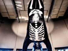 Zo kwam een kunstwerk van 8,5 meter hoog in Nemo