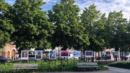 Fotoclub Focus fleurt marktplein op met fototentoonstelling in openlucht