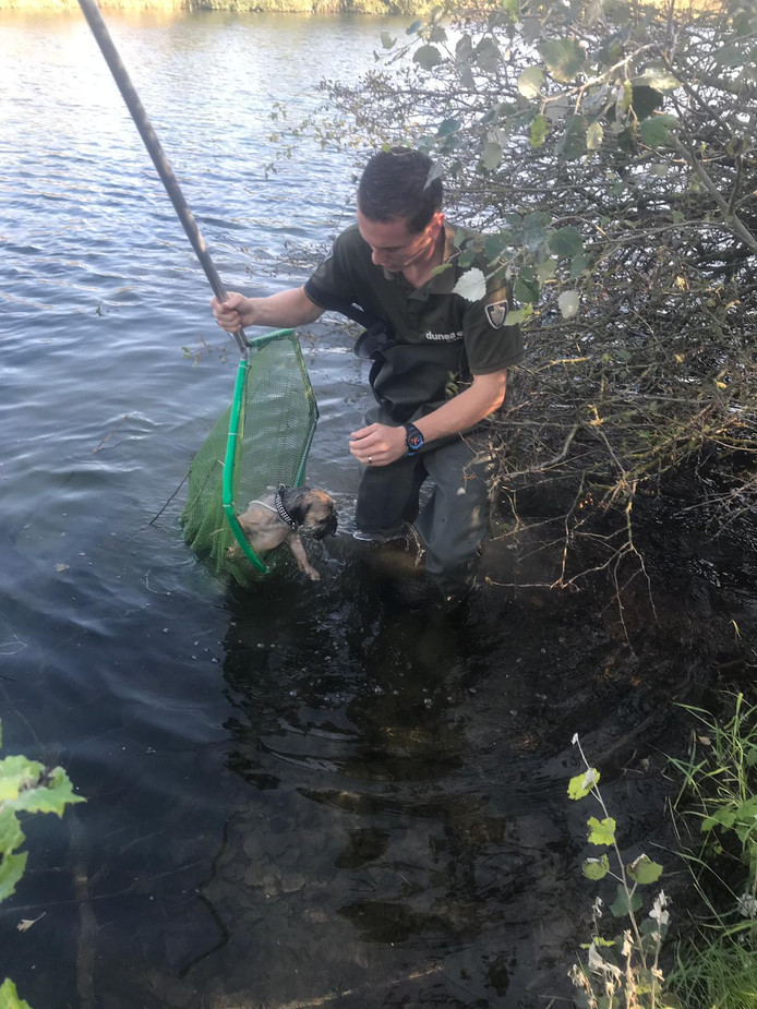 Duinwachter Gino Daamen redde een vermiste hond uit een Duinmeer in natuurgebied Meijendel.