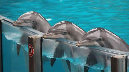 """Weyts wil einde maken aan dolfijnen in gevangenschap: """"Geen vergunningen meer voor dolfinaria"""""""